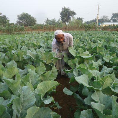 Gazipur Vegetable Cultination